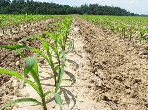 Geneticky modifikovaných potravin se bát netřeba