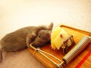 Jak na myši?