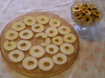 Plátky jablek připravené k sušení v elektrické sušičce