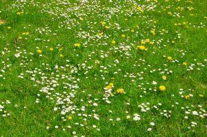 Jak docílit pěkného trávníku pro hraní, posezení a relaxaci