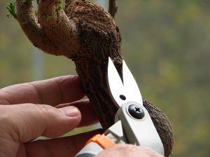 working-on-bonsai